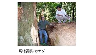 mokuzai1.jpg